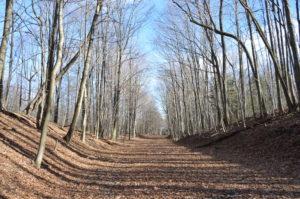 Fall leaf covered road