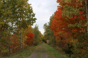 Road into the wood during Fall